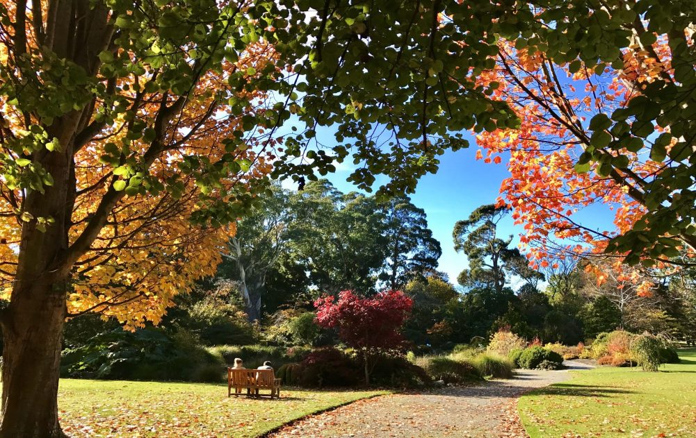 gardens with beautifully coloured trees