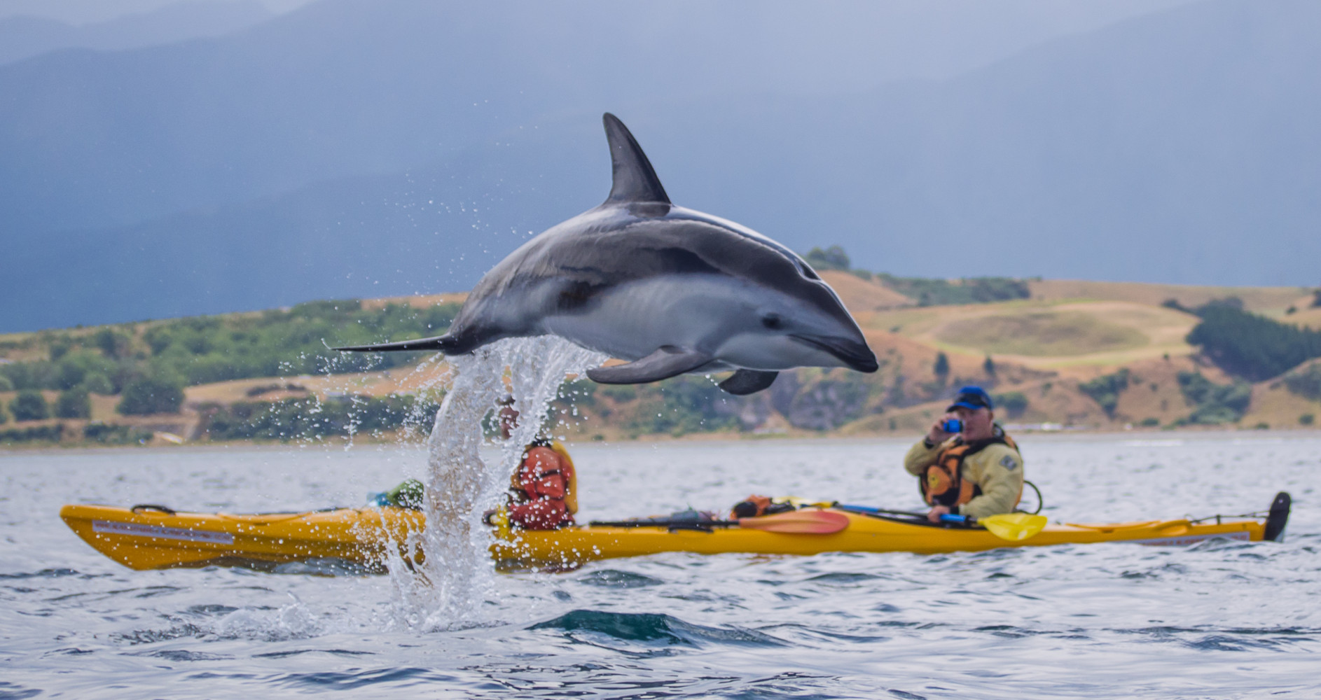 Dolphin leaping out of water in front of kayay
