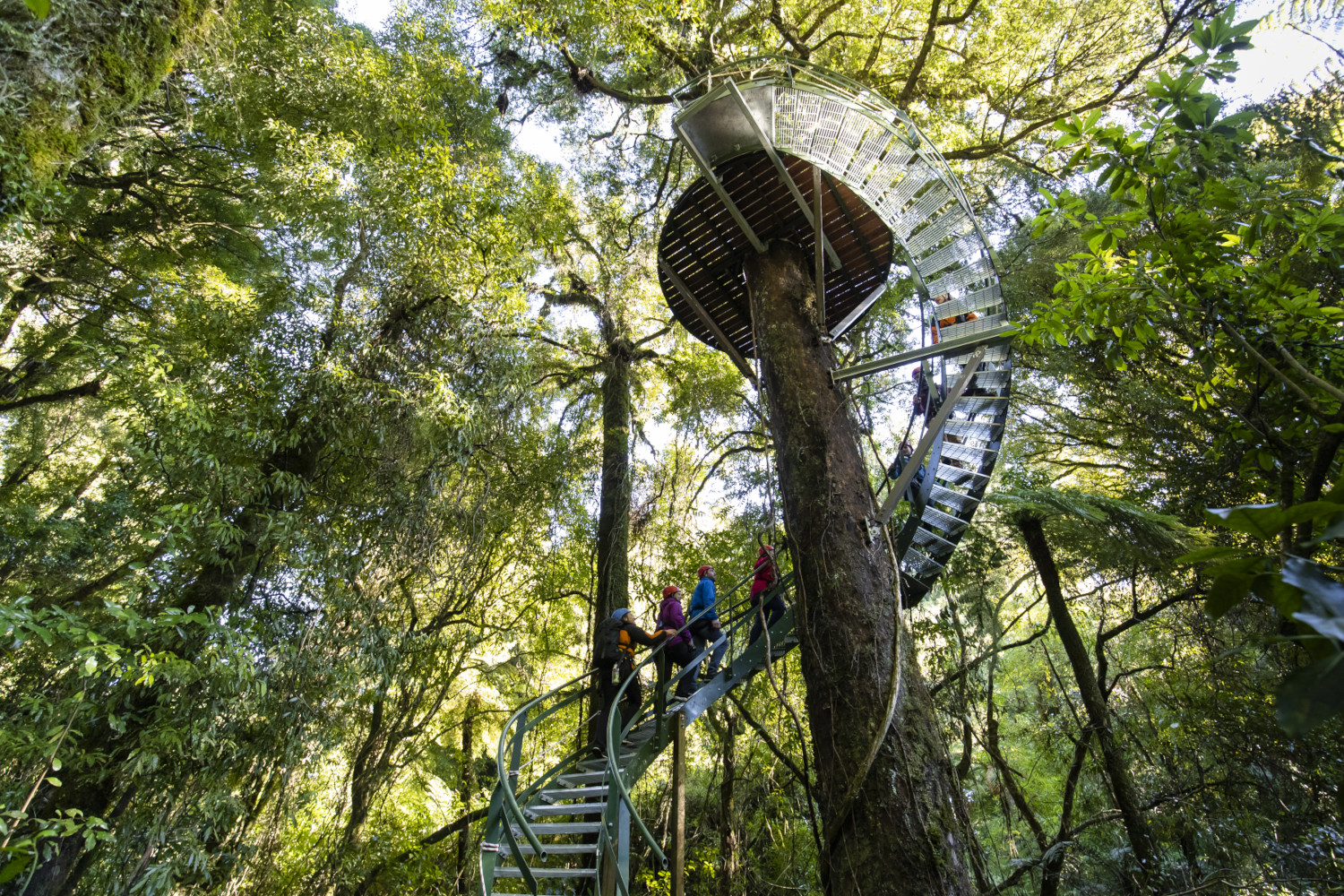 People going up a spiral staircase around a tree